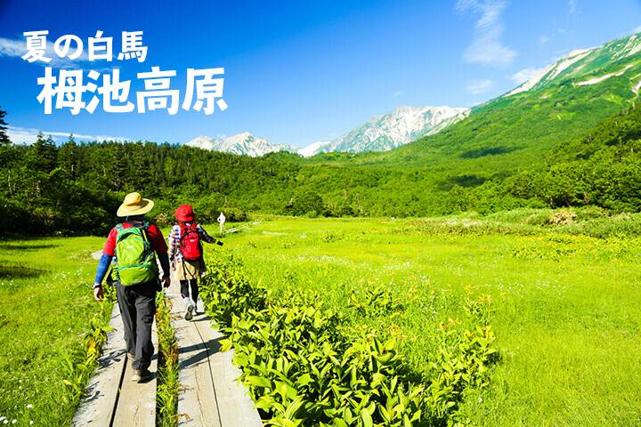 夏の白馬旅行[栂池高原]おすすめの観光地と立ち寄り温泉をご紹介!のイメージ