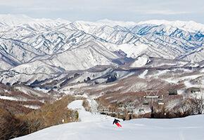 新宿朝発<水上宝台樹(ほうだいぎ)スキー場>リフト券付き 日帰りバスプラン
